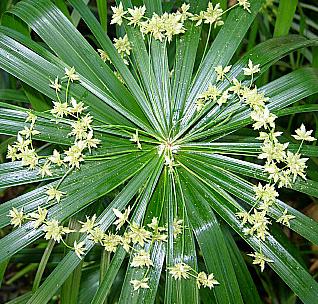 Цветы из папируса своими руками 64