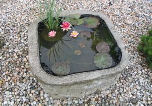 Миниатюрный пруд с кувшинками