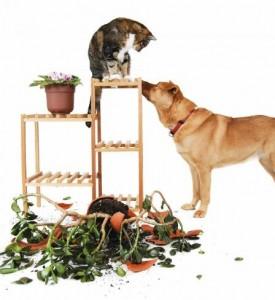 Домашние растения и жвиотыне