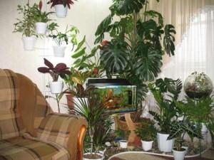 В зимний садик можно поместить аквариум с рыбками