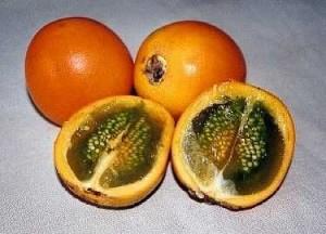 Плоды наранхиллы