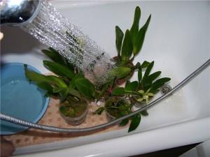 Теплый душ для растений