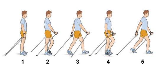 Техника выполнения скандинавской ходьбы