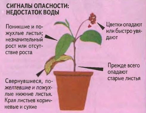 полив комнатных растений1