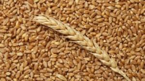 выбрать пшеницу