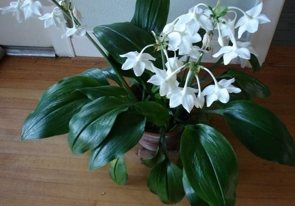 Комнатные цветы белые фото