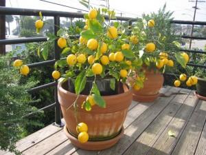 экзотические растения в доме