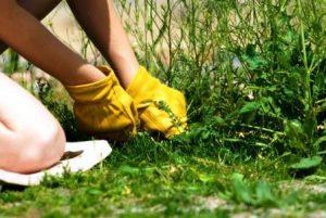 бороться с сорняками лучше присев