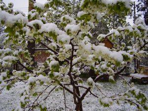derevya-pod-snegom