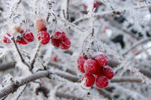 sneg-v-sadu