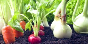 овощи на участке