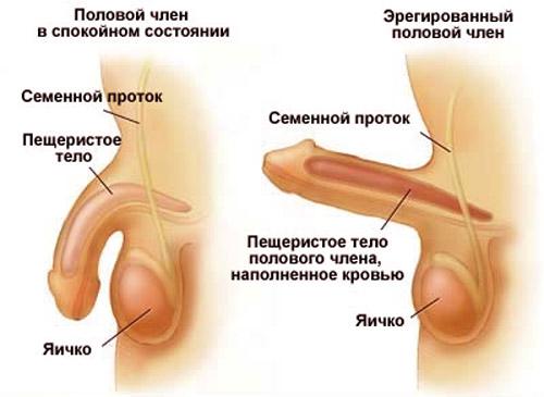 эректильная дисфункция1