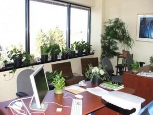 цветы в офисе2