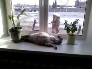Подоконник любимое место кошек