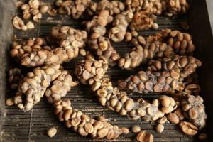 Ферментированное кофе
