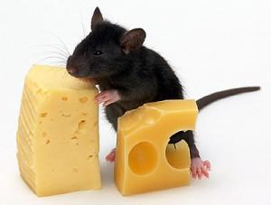 выбрать сыр