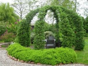 хвойная арка из лиственницы