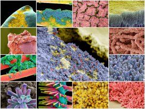 Бактерии, которые образуют зубной налет при тысячекратном увеличении