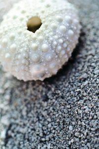 контагиозный моллюск под микроскопом
